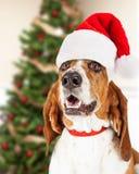 愉快的圣诞节由树的圣诞老人狗 免版税库存图片