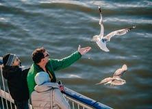 愉快的在轮渡的家庭哺养的海鸥 非常友好的海鸥采取从人的手的食物 免版税库存照片