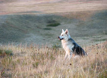 愉快的坐的狗在大草原 库存照片