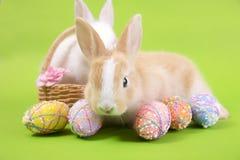 愉快的复活节彩蛋收藏、逗人喜爱的白色兔子兔宝宝和棕色兔子兔宝宝用篮子鸡蛋绘绿色背景 免版税图库摄影