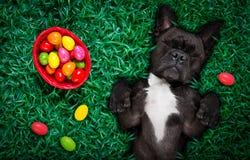 愉快的复活节狗用鸡蛋 免版税库存图片