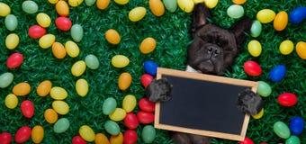 愉快的复活节狗用鸡蛋 库存照片