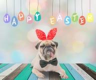 愉快的复活节天'与逗人喜爱的狗哈巴狗佩带的兔子兔宝宝耳朵的s明信片 免版税库存照片