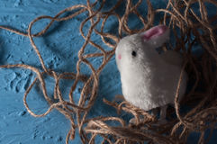 愉快的复活节 在一种蓝色颜色的小兔子白色兔宝宝 免版税库存图片