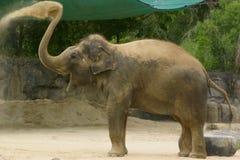 愉快的大象 免版税图库摄影