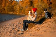 愉快的女孩画象有两滑稽的博德牧羊犬狗的在海滩在海边 背景的秋天黄色森林 免版税库存照片