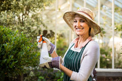 愉快的女性在植物的花匠喷洒的水 库存图片