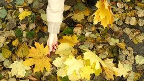愉快的妇女投掷的叶子在慢动作的秋天,微笑 有快乐和激动的少妇乐趣投掷的黄色 股票录像