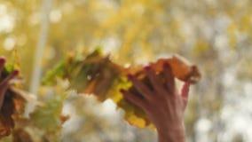 愉快的妇女有乐趣投掷的叶子在慢动作的秋天,微笑 股票录像