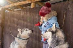 愉快的孩子和狗自圣诞前夕 获得的孩子与爱斯基摩的乐趣在家 免版税库存图片