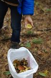 愉快的孩子在秋天森林里会集蘑菇 图库摄影