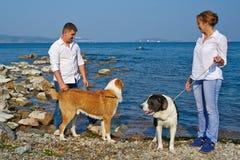 愉快的家庭走与在海滩的两条大狗 免版税库存图片