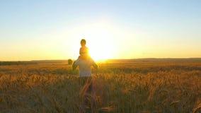 愉快的家庭,拿着他的肩膀的父亲一个儿子,在麦田走并且观看日落 影视素材