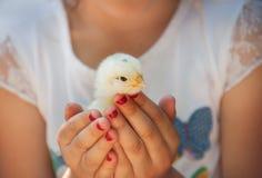 愉快的小女孩在他的手上拿着一只鸡 有波尔的孩子 图库摄影