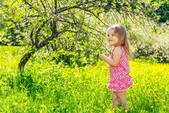 愉快的小女孩在春天晴朗的公园 免版税库存图片
