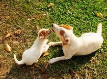 愉快的小狗使用与她的绿色草坪的妈妈在一个美好的夏日 免版税库存照片