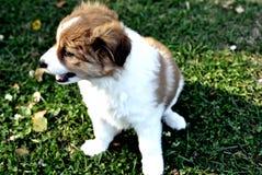 愉快的小狗 免版税库存图片