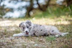 愉快的小狗 免版税图库摄影