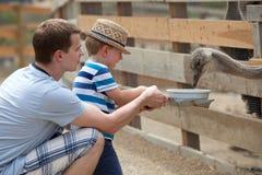 愉快的小男孩提供的驼鸟 免版税库存图片