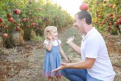 愉快的微笑的和laughting的父亲画象有逗人喜爱的小女儿的获得乐趣在pomegrate果子庭院 收获,家庭v 免版税库存照片