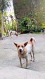 愉快的微笑的狗 图库摄影