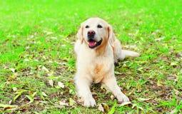 愉快的快乐的金毛猎犬狗在草说谎 免版税库存图片