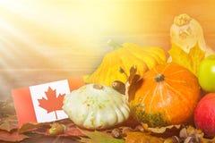 愉快的感恩天在加拿大 菜、南瓜、南瓜、苹果、槭树和橡木叶子,在木背景的橡子 Harve 免版税库存照片