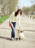 愉快的所有者和拉布拉多猎犬尾随户外走 免版税库存照片
