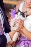 愉快的拿着可爱的甜小的小猫的新娘和时髦的新郎 库存照片