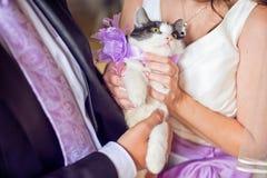 愉快的拿着可爱的甜小的小猫的新娘和时髦的新郎 免版税库存图片