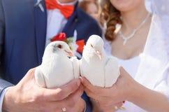 愉快的新娘和新郎在手上的拿着白色鸠 免版税库存照片