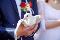 愉快的新娘和新郎在手上的拿着白色鸠 库存图片
