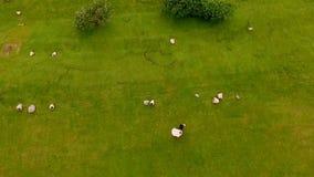 愉快的新娘和新郎在绿草背景  鸟瞰图视图从上面 影视素材
