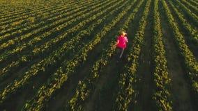 愉快的无忧无虑的女孩跑在绿色草莓灌木中的,从寄生虫的看法 股票视频