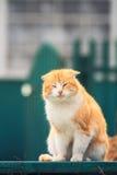 愉快的橙色猫坐一条长凳在一晴朗的spr的庭院里 免版税库存照片