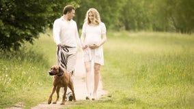 愉快的步行的夫妇未来父母与狗在公园 图库摄影