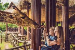 愉快的母亲和儿子观看的和哺养的长颈鹿在动物园里 获得愉快的家庭与动物徒步旅行队公园的乐趣在温暖的夏日 库存图片