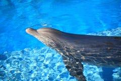 愉快的海豚 免版税库存照片