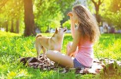 愉快的狗和所有者在夏天公园 免版税库存照片
