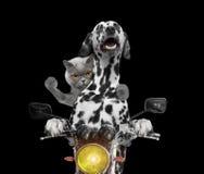愉快的狗和猫在摩托车乘坐 库存照片