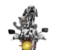愉快的狗和猫在摩托车乘坐 库存图片