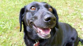 愉快的狗在夏天 免版税库存图片
