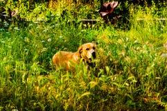 愉快的狗在天堂般的村庄议院庭院里 库存照片