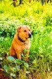 愉快的狗在天堂般的村庄议院庭院里 库存图片