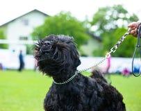 愉快的狗在草甸 库存图片