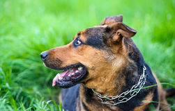 愉快的狗在草甸 免版税图库摄影