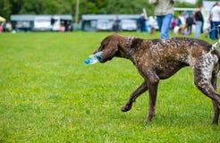 愉快的狗在草甸 图库摄影