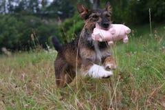 愉快的狗 免版税库存图片