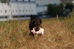 愉快的狗 免版税库存照片
