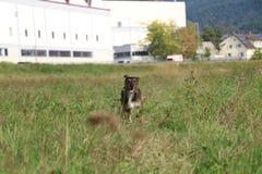 愉快的狗 图库摄影